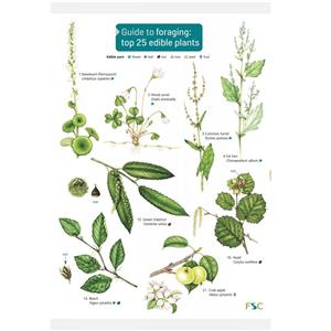 FSC Fold-out Chart - Guide to Foraging - Top 25 Edible Plants