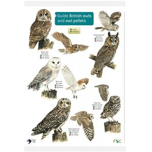 FSC Fold-out Chart - Guide to British Owls and Owl Pellets