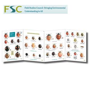 FSC Fold-out Chart - Ladybirds