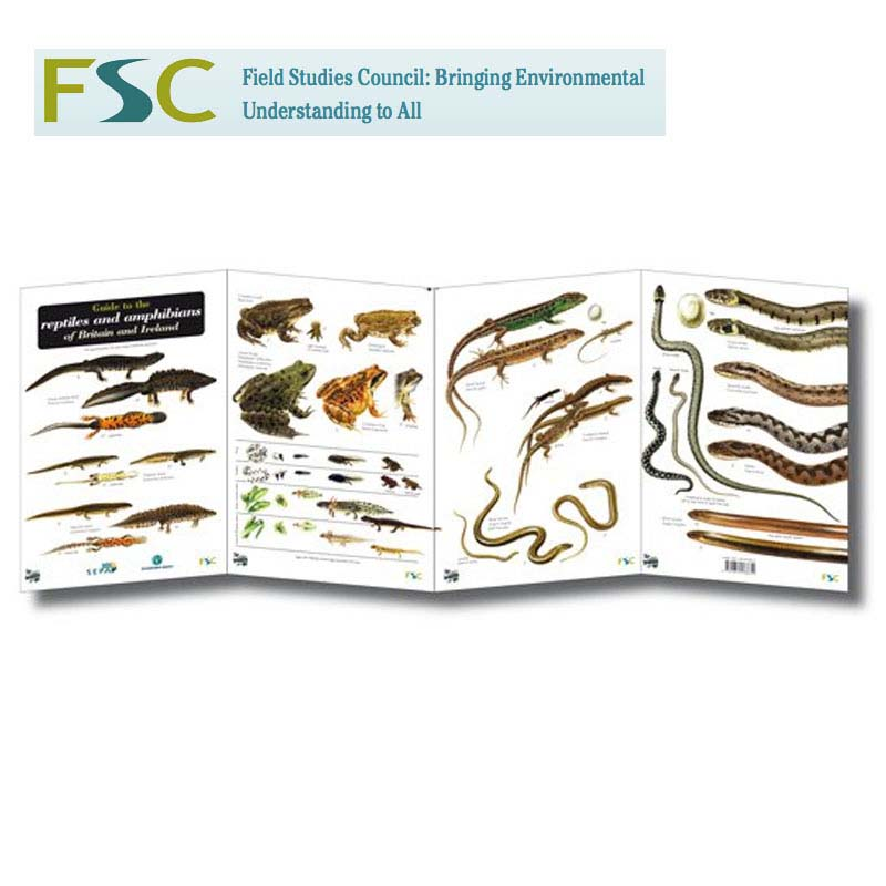 FSC Fold-out Chart - Reptiles and Amphibians | Tamarack ...