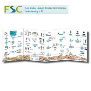 FSC Fold-out Chart - Woodland Name Trail