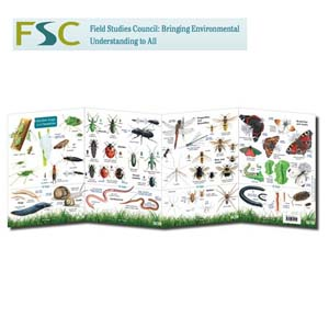 FSC Fold-out Chart - Garden Bugs and Beasties