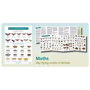 FSC Fold-out Chart - Day Flying Moths