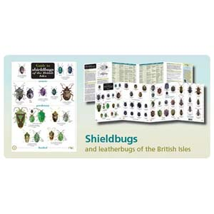 FSC Fold-out Chart - Shieldbugs