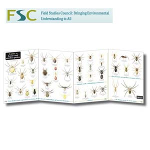 FSC Fold-out Chart - Spiders