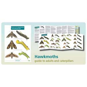 FSC Fold-out Chart - Hawkmoths