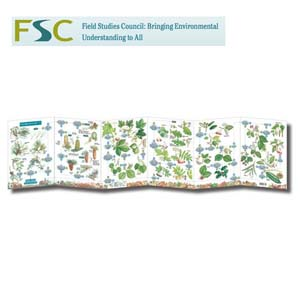 FSC Fold-out Chart - Tree Name Trail